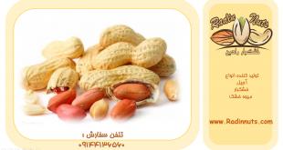 فروش عمده بادام زمینی در انواع مختلف